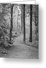 Path In The Foggy Forest Greeting Card