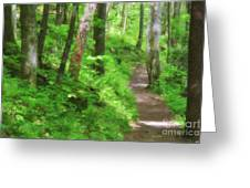Path In The Forest Greeting Card by Jill Lang