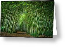 Path Through Bamboo Forest E139 Greeting Card