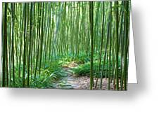 Path Through Bamboo Forest Greeting Card