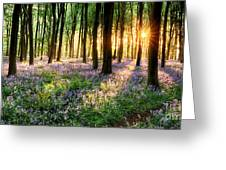 Sunrise Path Through Bluebell Woods Greeting Card