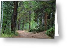 Path Through The Pines - Casper Mountain - Casper Wyoming Greeting Card