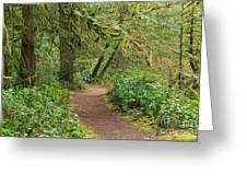 Path Through The Rainforest Greeting Card