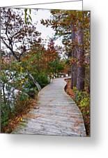 Path Through The Wetlands 10 Greeting Card