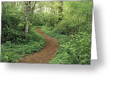 Path Through Woods Greeting Card