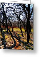 Path Thru The Oaks Greeting Card by David Taylor