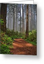 Path Thru The Redwoods Greeting Card