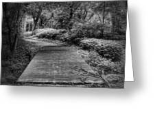 Path To The Forest Greeting Card