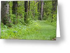 Path To The Green Forest Greeting Card