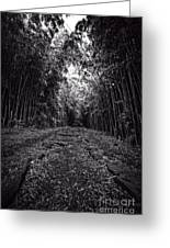 Pathway Through A Bamboo Forest Maui Hawaii Greeting Card