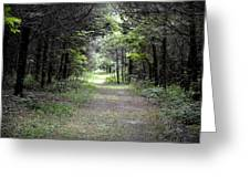 Pathway Through The Forest Greeting Card