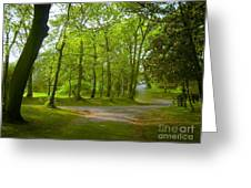 Pathway Through The Trees Greeting Card