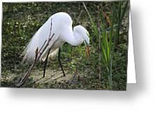 Charleston Sc Snowy White Egret Greeting Card by Ella Char