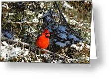 Patient Cardinal Greeting Card