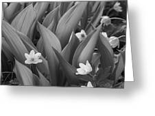 Pattern Of Flowers And Leaves - Monochrome Greeting Card