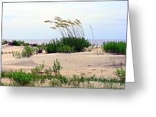 Patterned Dune With Oats Greeting Card