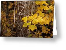 Patterns Of Fall Greeting Card