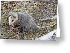 Pawing Possum Greeting Card