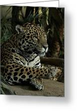 Paws Of A Jaguar Greeting Card