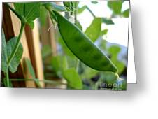 Pea Pod Growing Greeting Card
