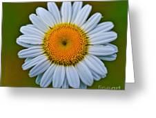 Peace Daisy Greeting Card