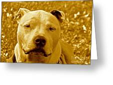 Peace To End Dog Fighting Greeting Card by Q's House of Art ArtandFinePhotography