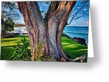 Peace Tree Greeting Card