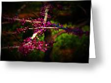 Peace With Purple Greeting Card
