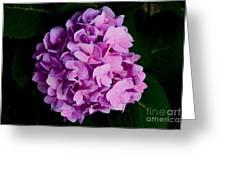 Peaceful Beauty Greeting Card