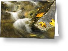 Peaceful Creek Greeting Card