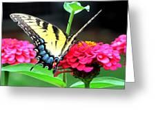 Peaceful Essence Greeting Card