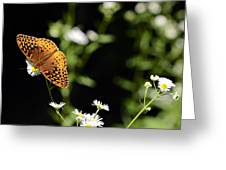 Peaceful Forest Greeting Card