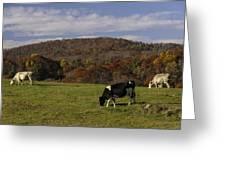 Peaceful Pasture Greeting Card