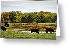 Peaceful Pastures Greeting Card