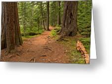 Peaceful Path To Cheakamus Lake Greeting Card