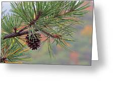 Peaceful Pinecone Greeting Card