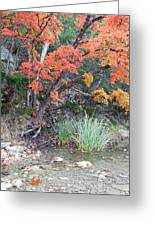 Peaceful Retreat Lost Maples Texas Hill Country Greeting Card