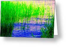 Peaceful Stream  Quebec Landscape Art Tall Grasses At The Lakeshore Waterscene Carole Spandau Greeting Card