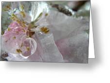 Peach Blossom In Ice Three Greeting Card