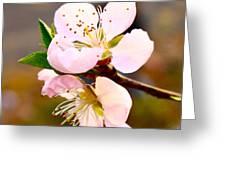Peach Blossoms 1 Greeting Card