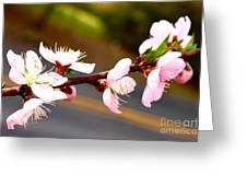 Peach Blossoms 2 Greeting Card