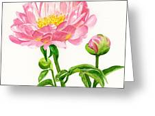 Peach Colored Peony With Buds Greeting Card