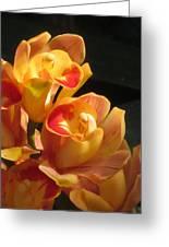 Peach Cymbidium Orchid Greeting Card