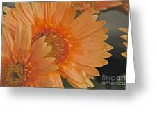 Peach Daisy Cluster Greeting Card