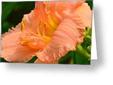 Peach Day Lilly Greeting Card