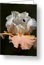 Peach Elegance Greeting Card