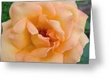 Peach Enchantment Greeting Card