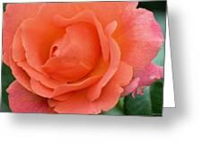 Peach Faced Rose Greeting Card