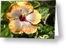 Peach Flower Greeting Card
