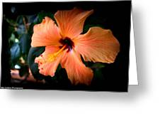 Peach Hibiscus Bloom Greeting Card